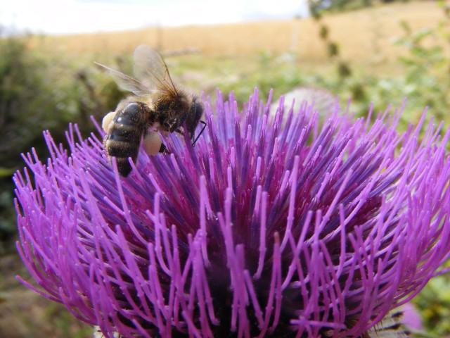 644-abeille-689